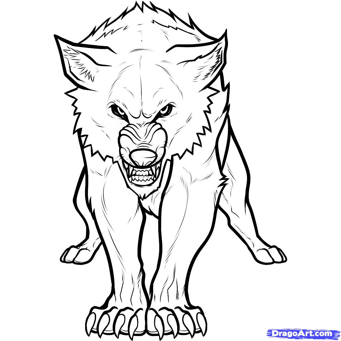 1086x1086 Wolf Drawing