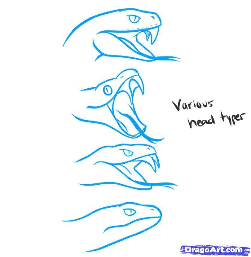 838x859 Collection Of Snake Head Drawing Side View High Quality