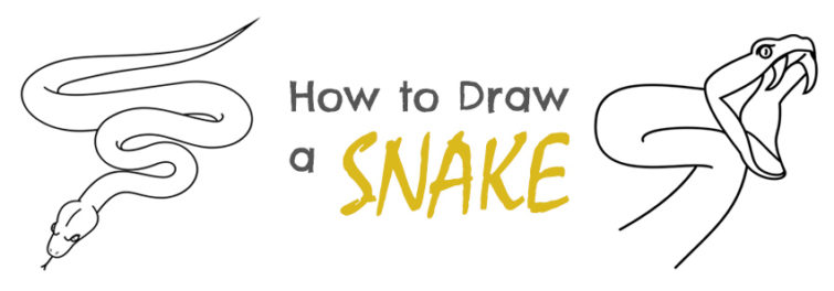 755x264 How To Draw A Snake