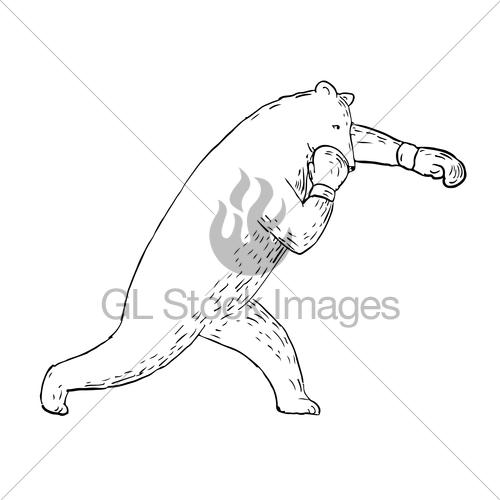 500x500 Kodiak Bear Left Straight Punch Drawing Gl Stock Images