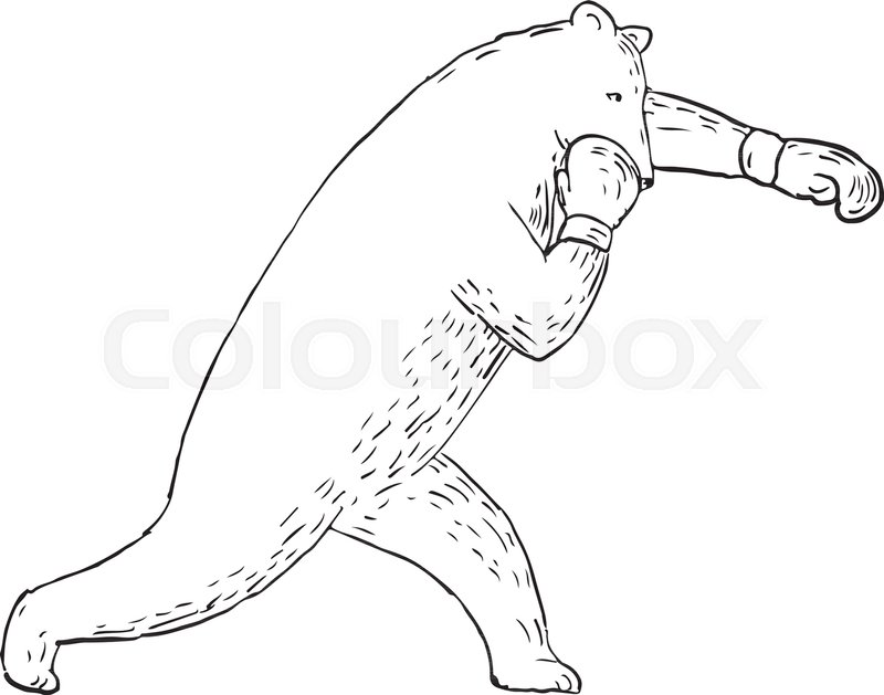 800x629 Drawing Sketch Style Illustration Of A Kodiak Bear, Grizzly