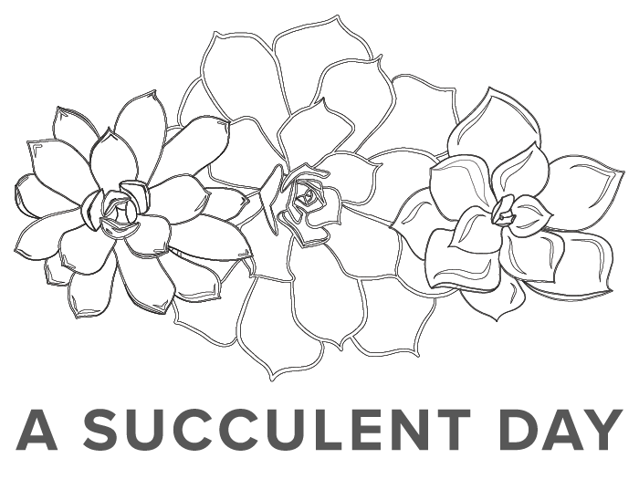 Succulent Line Drawing
