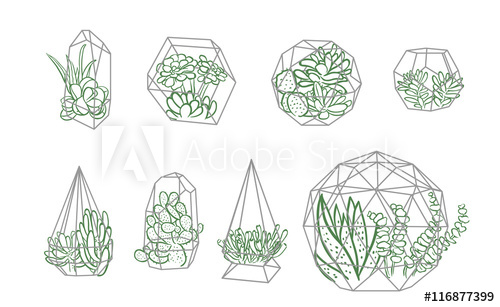 500x307 Succulent In Terrarium Illustration Line Sketch Set