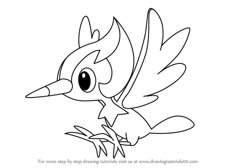 800x567 Step By Step How To Draw Pikipek From Pokemon Sun And Moon