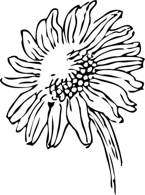 474x640 Black, Outline, Drawing, Sketch, Sun, Flower, White