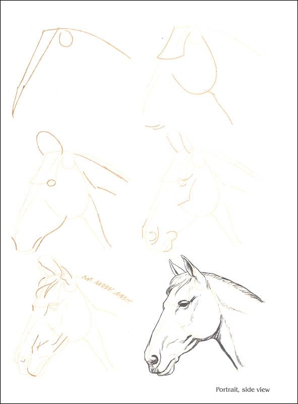 591x800 Draw 50 Horses) (Watson Guptill Publishers) (007096)