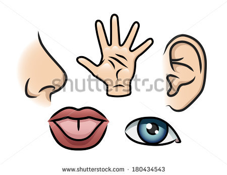 450x346 Smell, Touch, Hearing, Taste Clipart Panda