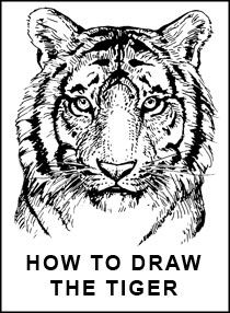 Tiger Head Drawing Easy At Getdrawings Com Free For Personal Use
