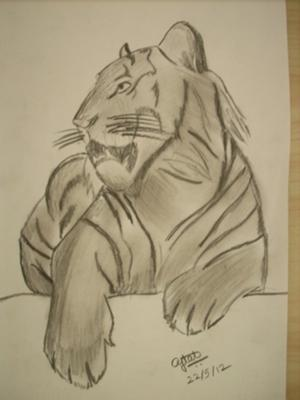 Tiger Pencil Drawing Images At Getdrawings Com Free For Personal