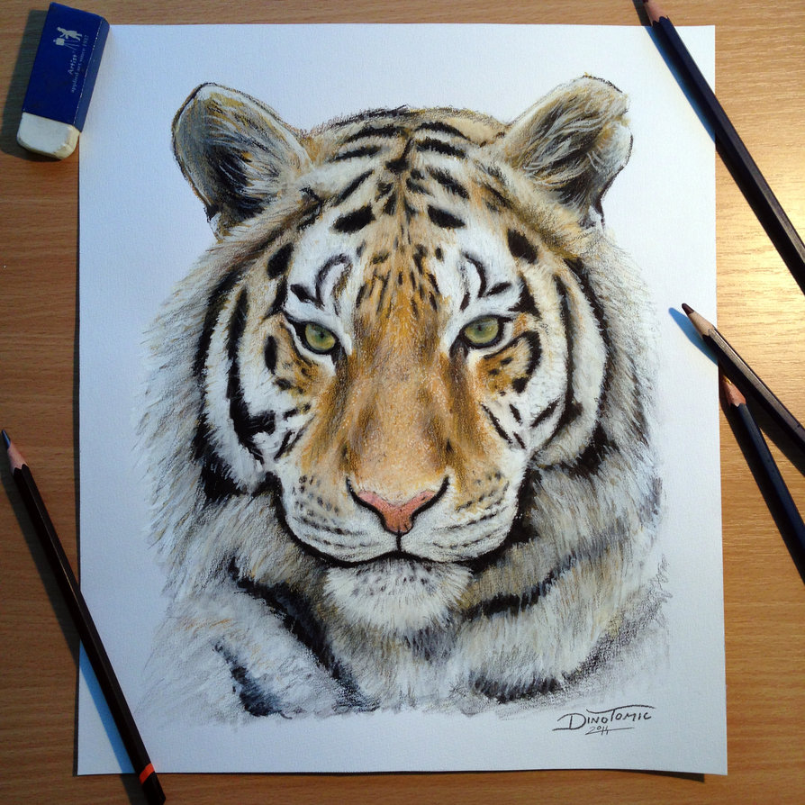 894x894 tiger pencil drawing by atomiccircus