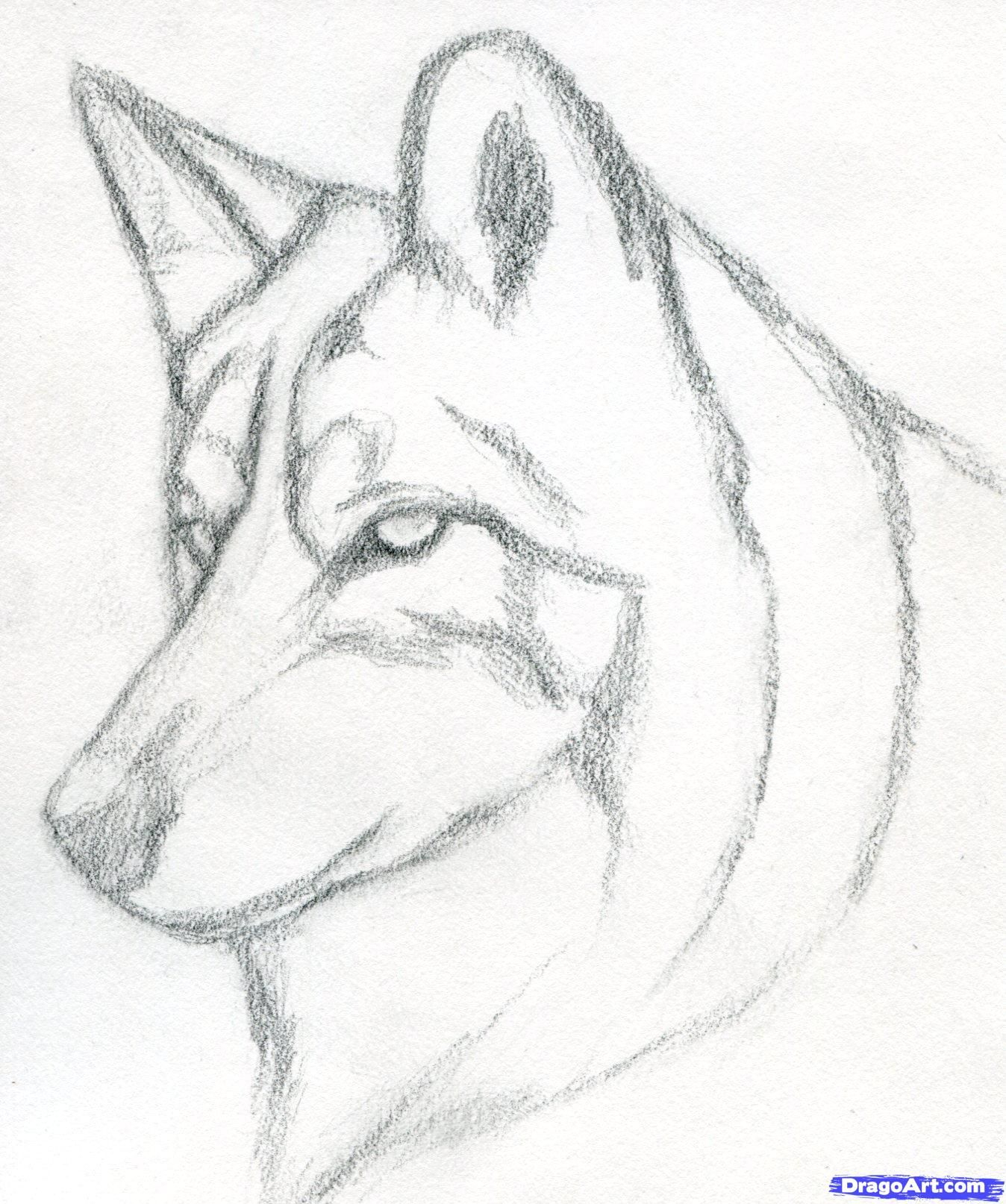 1348x1614 Wolf Sketch Easy How To Draw A Wolf Head, Mexican Wolf Step 3
