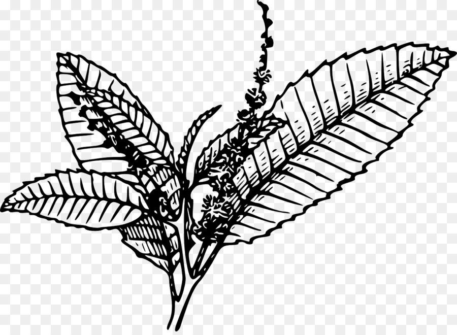 900x660 Tobacco Pipe Tobacco Plants Clip Art