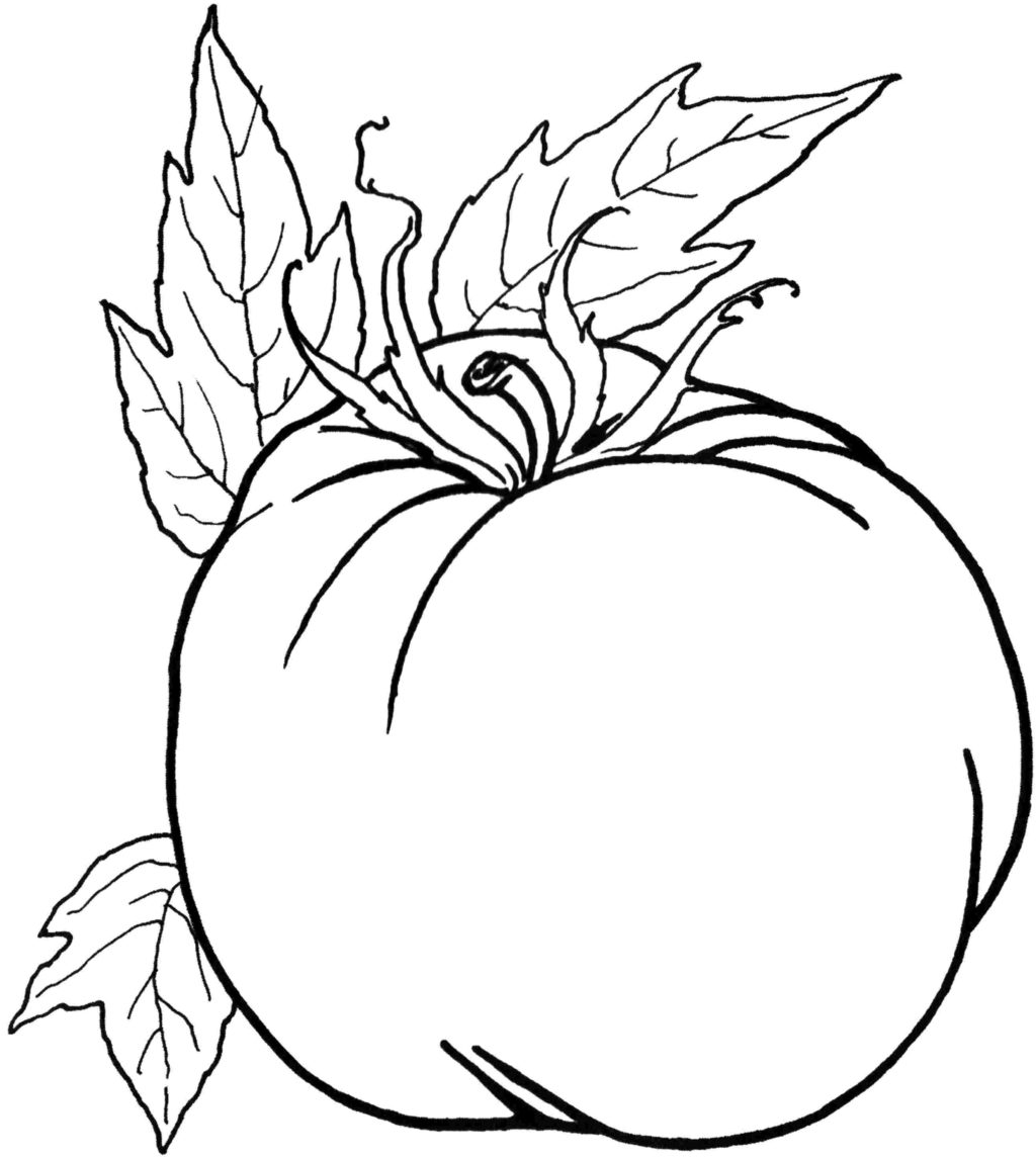Tomato Drawing Pictures at GetDrawings | Free download