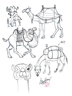 236x312 How To Draw A Camel Flavs Will Certainly Need Is As A Newborn