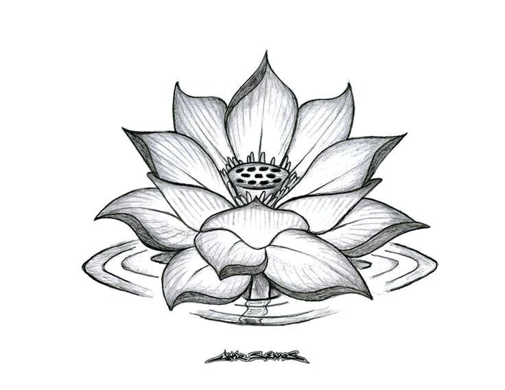 736x568 Drawings Of Flowers Gallery Of Amazing Drawings Of Flowers Flower