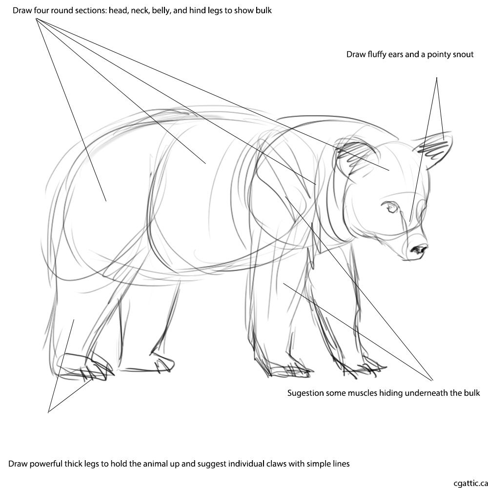 1000x1000 Realistic Bear Drawing In 4 Steps With Photoshop Bear Drawing