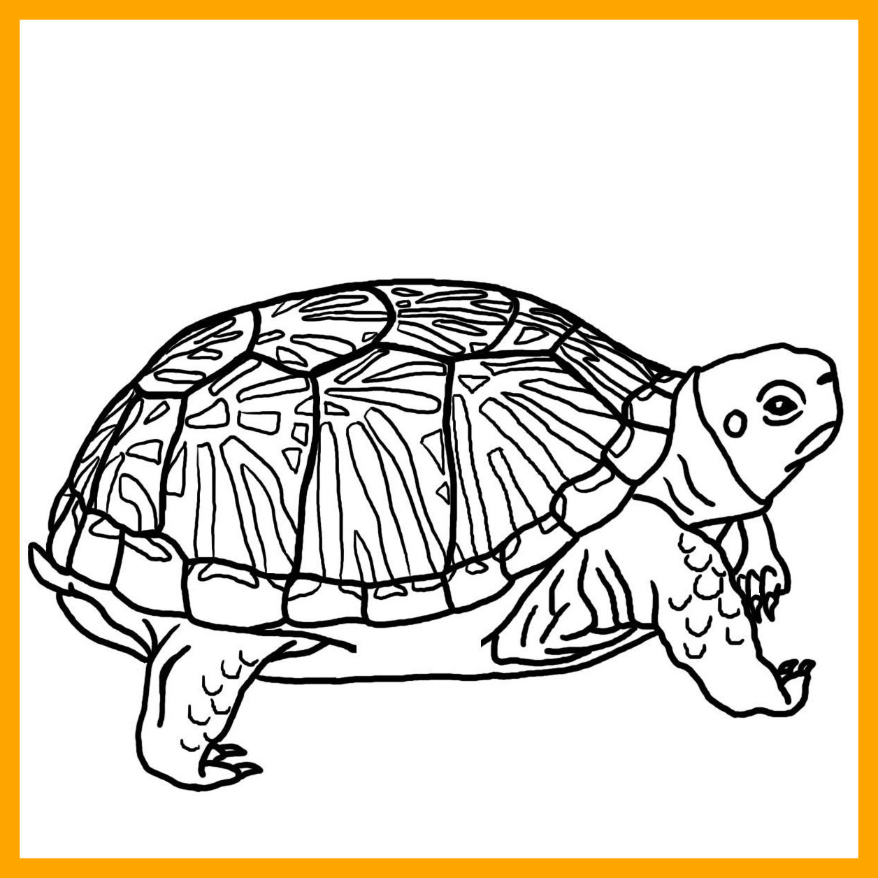 turtle shell pattern drawing at getdrawings com free for personal