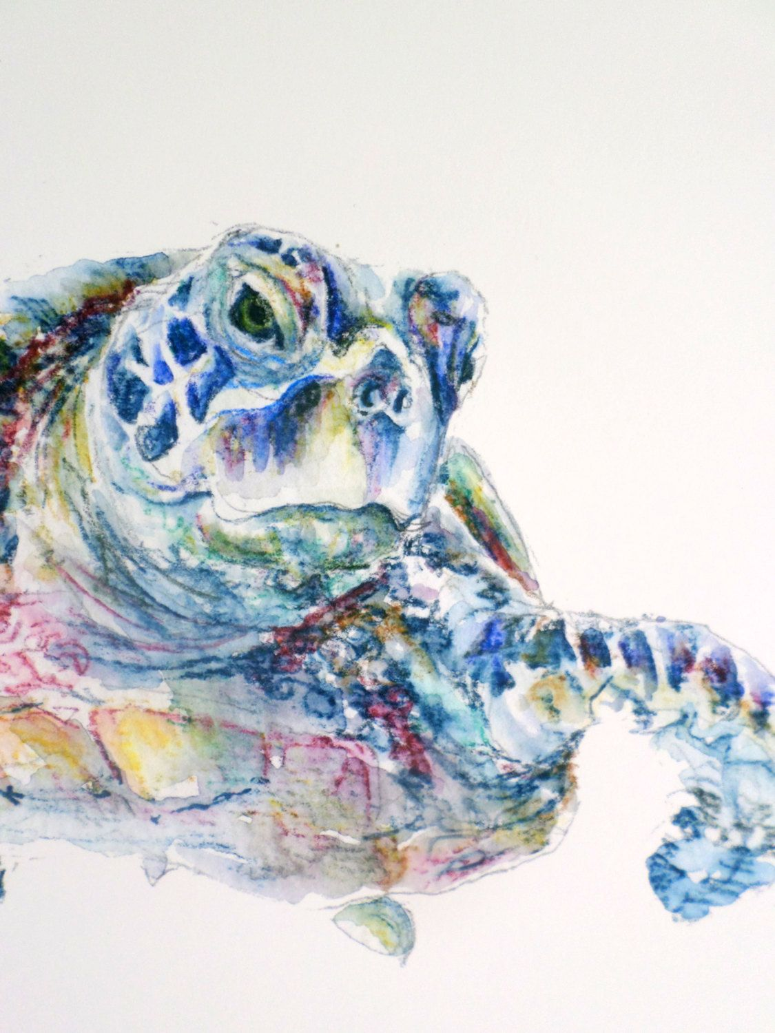 1125x1500 Turtle Illustration, Turtle Drawing, Turtle Painting, Sea Turtle