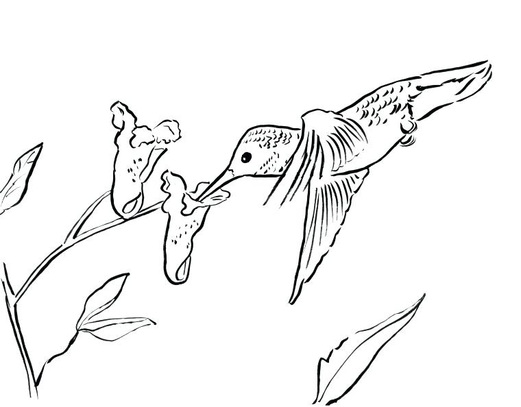 760x594 Hummingbird Coloring Page Bell Free Printables Planner Tumblr