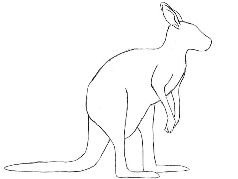 Wallaby Drawing