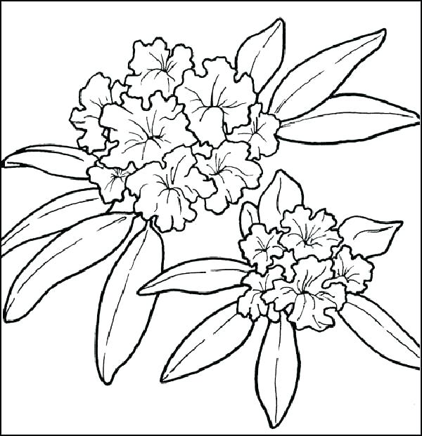 600x621 Washington State Flag Coloring Page State Coloring Pages State