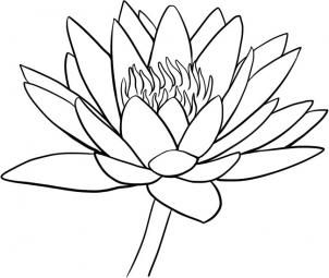 Water Lily Drawing Outline