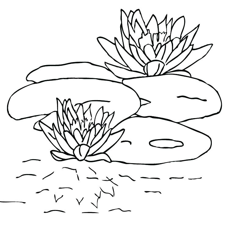 793x759 Lily Pad Coloring Page Calla Lily Coloring Pages Page Lily Pad