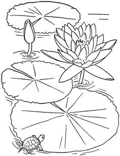 236x306 Simple Water Lily Drawing Water Lily Pencil Drawings Stencils