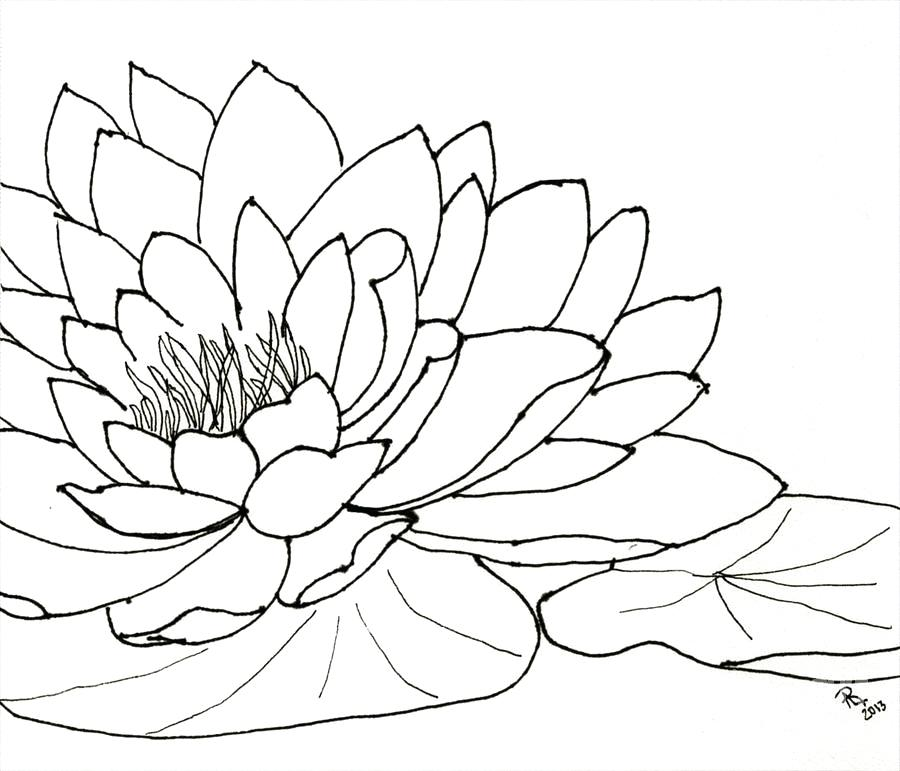 900x771 Water Lily Drawings Graphite Drawing Waterlily By Butt Water Lily