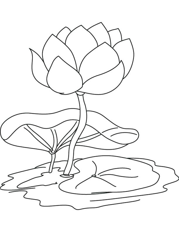 612x792 Water Lily Pad Coloring Page Together With Lily Pad Outline
