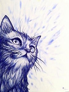 225x300 Whisker Drawings