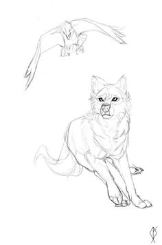 236x355 Wolf Sketches Which I Will Be Using For Reference Only How