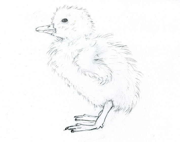 710x560 Adorable Art Learn How To Draw And Paint A Duckling