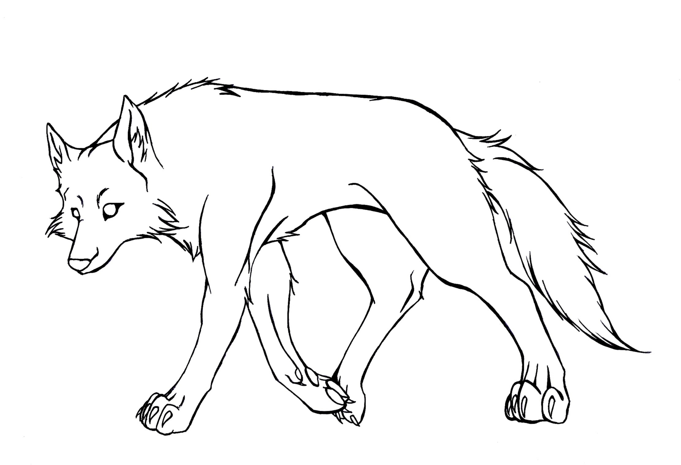 2224x1519 Cartoon Wolf Drawing Wolf Lineart By Tcs1992 What I