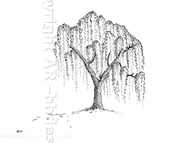 Willow Tree Line Drawing