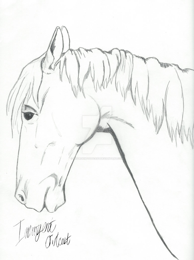 772x1034 Horse Side View Drawing By Insurgentoutcast