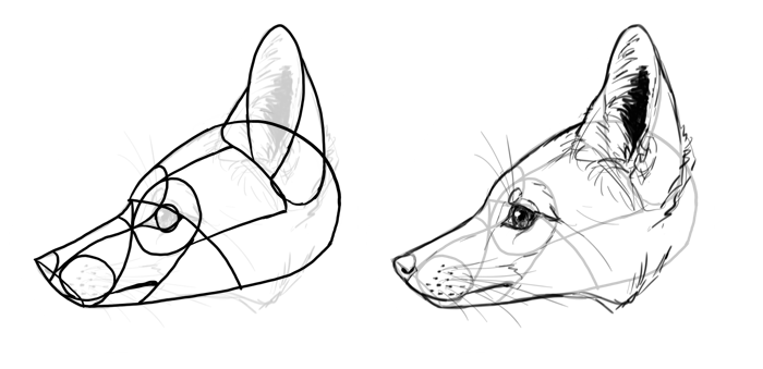 700x339 How To Draw A Fox Step By Step
