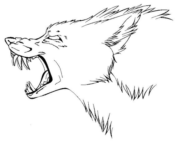 564x463 Collection Of Snarling Wolf Side View Drawing High Quality