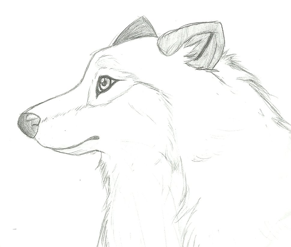 969x824 Collection Of Wolf Head Side View Drawing High Quality, Free