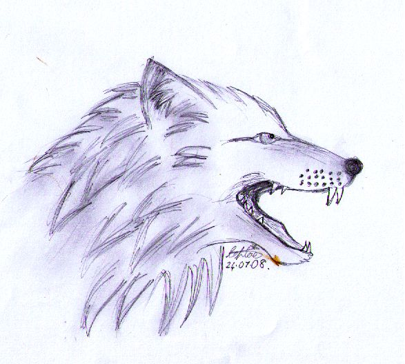 587x528 Collection Of Wolf Head Drawing Side View High Quality, Free