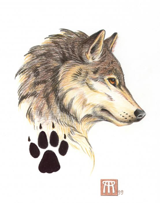 554x700 Collection Of Wolf Head Side View Drawing High Quality, Free