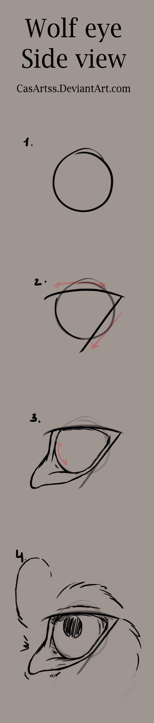 497x2329 Wolf Eye Tutorial (Side View) By Casartss