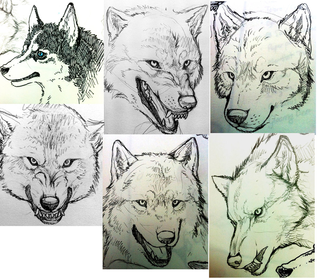 1024x901 Wolf Head Sketches By Byowt1125