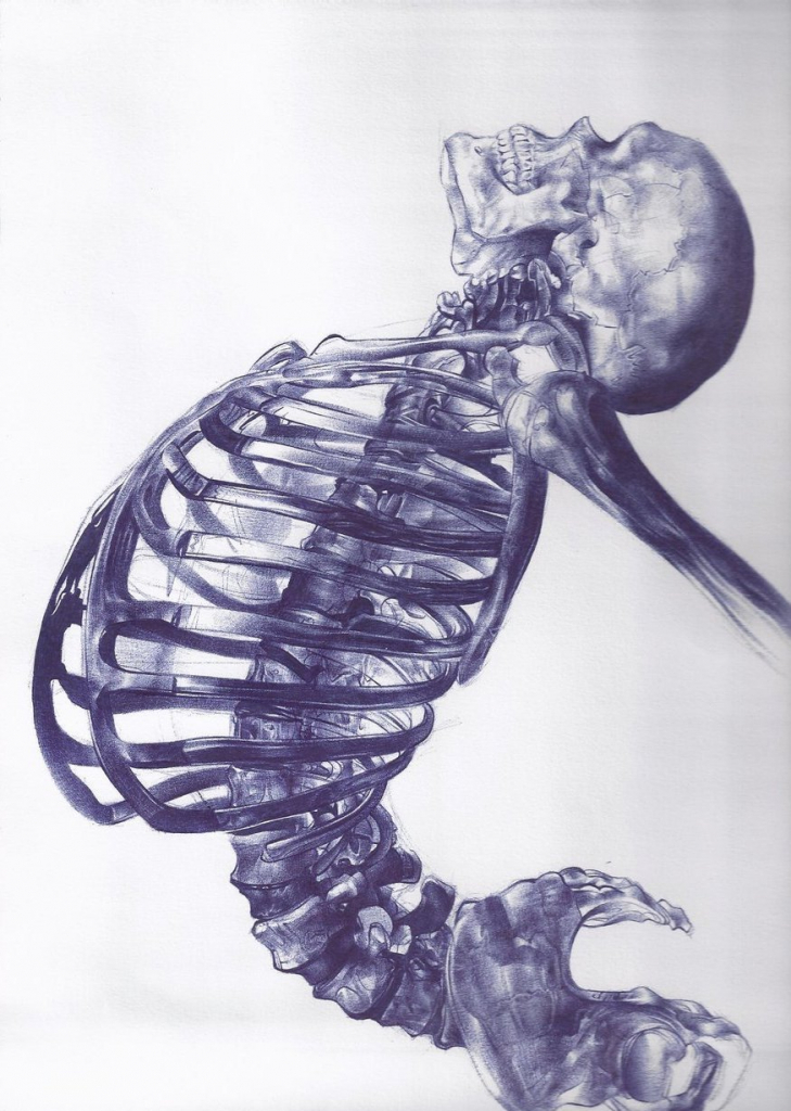 729x1024 Skeleton Drawing Tumblr 17 Best Images About Chiro World