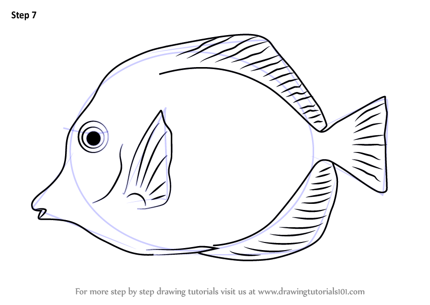 846x600 Learn How To Draw A Yellow Tang (Fishes) Step By Step Drawing