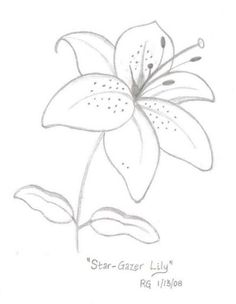 236x304 How To Draw A Daffodil Yellow Spring Flowers, Spring