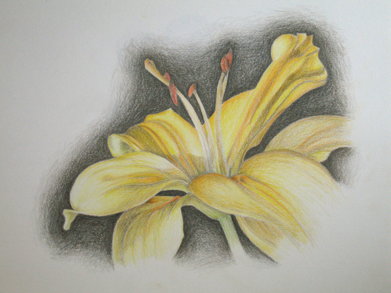 Yellow Drawing At Getdrawings Com Free For Personal Use Yellow