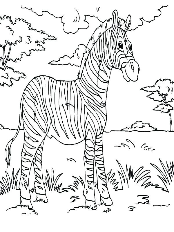 600x800 Coloring Page Zebra Baby Zebra Coloring Pages Zebra Color Page