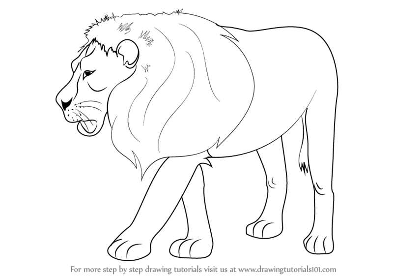 800x565 Learn How To Draw A Lion (Zoo Animals) Step By Step Drawing
