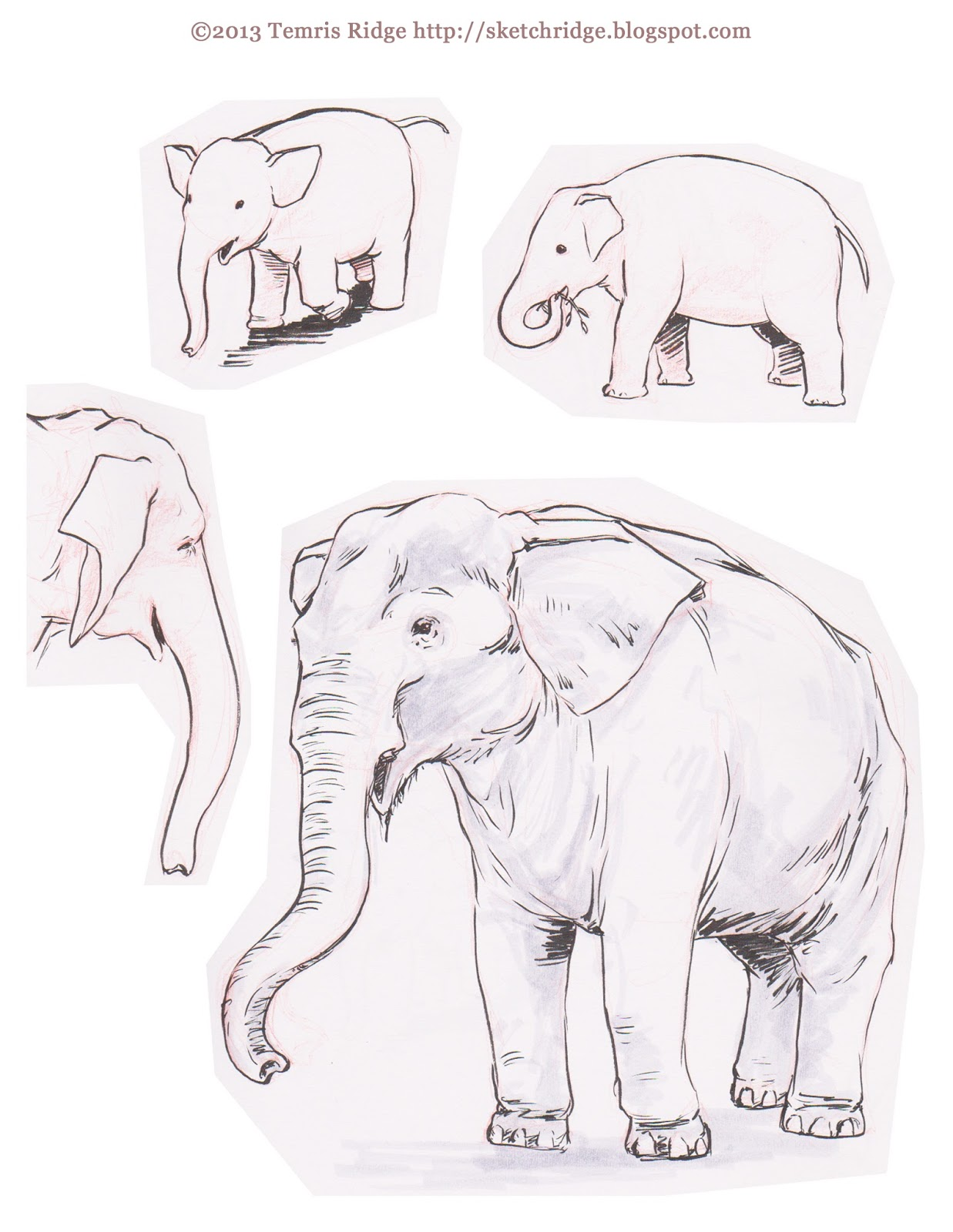 1237x1600 Sketch Ridge More Zoo Drawing With Asifa Portland And
